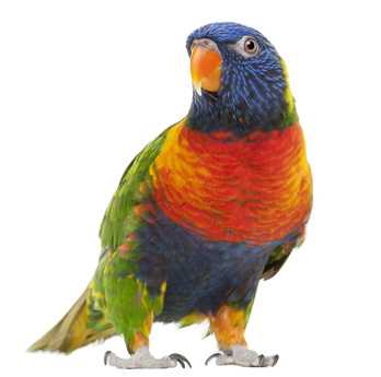 Oiseau-nov2012